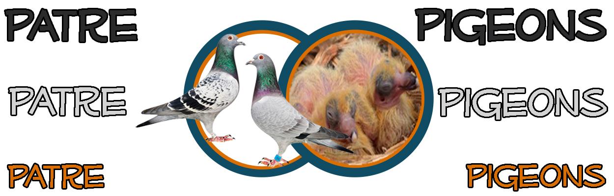 Patre Pigeons - Denekamp